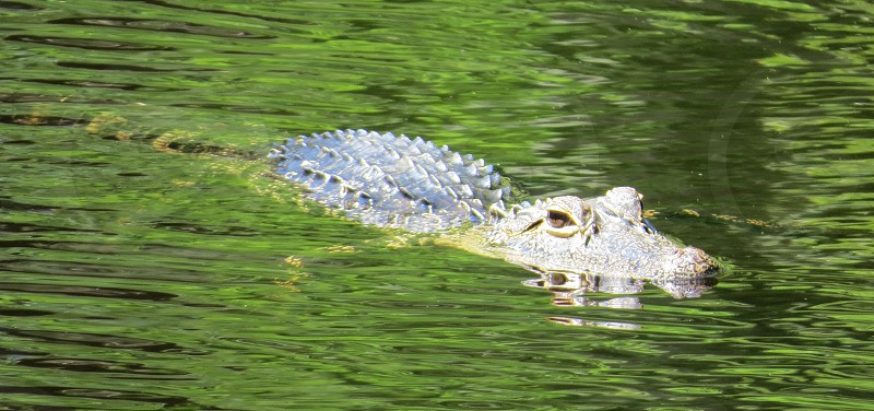 Wildlife Florida photo