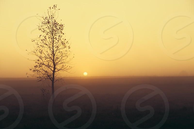 single tree in the field photo