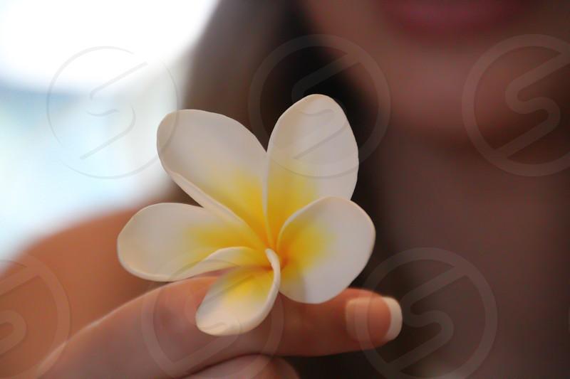 hand holding frangipani plumeria flower pretty yellow white photo
