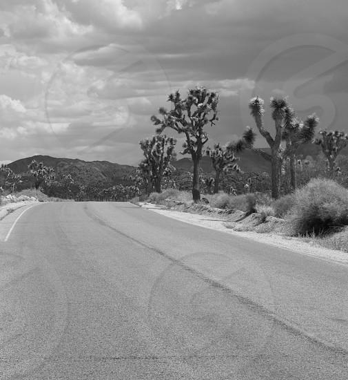 Joshua Tree road photo