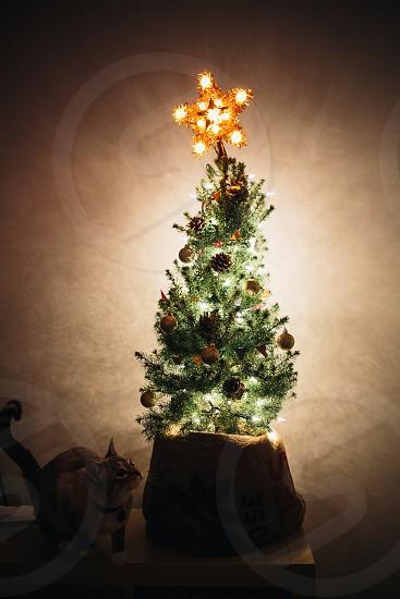 lighted christmas tree decor photo