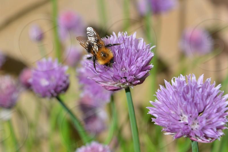 Flower bee Summer macro honey photo
