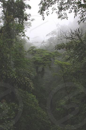 Bridge over the rainforest on a foggy day photo
