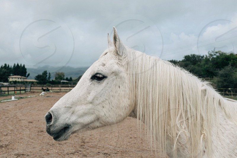 gray clouds over a white horse in a fenced dirt arena photo