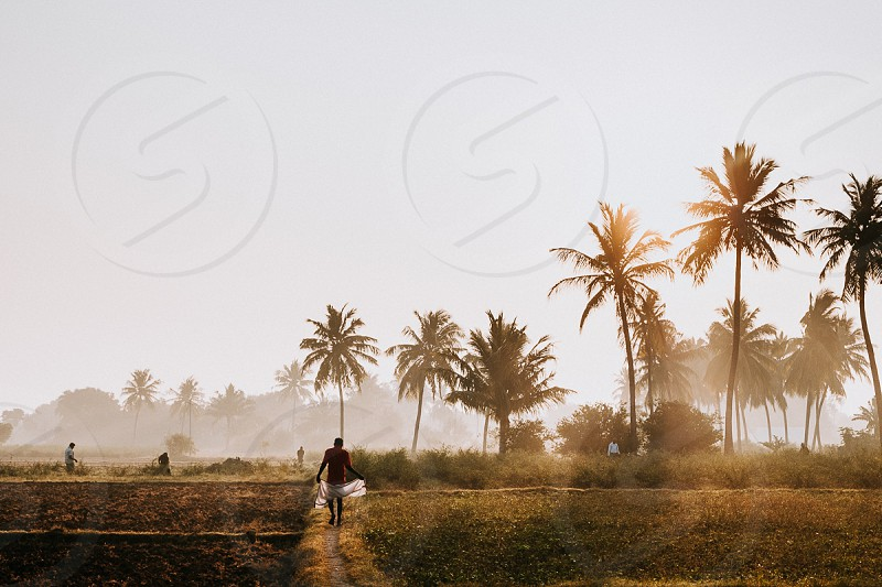 Sunrise in India People starting to work on a rice field. photo