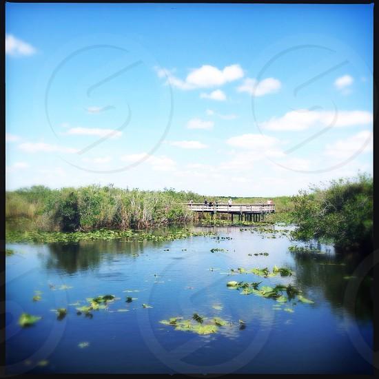 Everglades in Florida  USA  photo