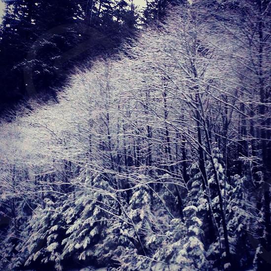 'Winter wonderland' Snoqualmie Pass Washington photo