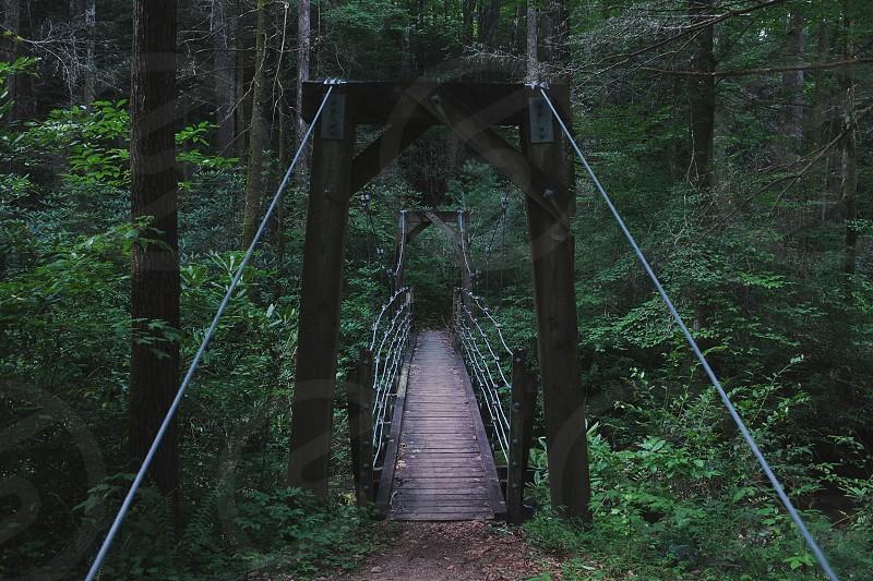 gray wooden bridge in forest photo