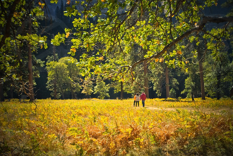 3 person on yellow grass field photo