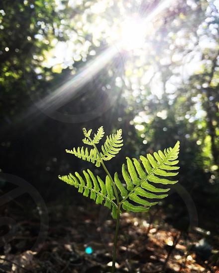 Fern green sunlight grow plant Forrest  photo
