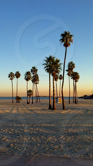 Palm trees and cabana silhouetted against the sunset on the shore of Long Beach California. Sand water and trees - nature's beauty at its best. Travel in America (USA) photo