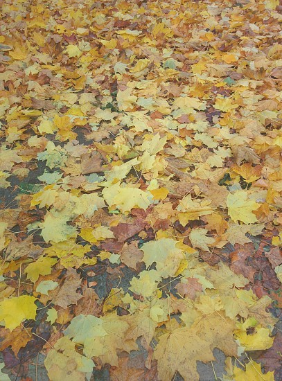 fallen leaves photo