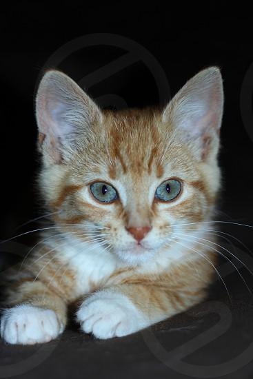 Cat kitten kitty pets photo