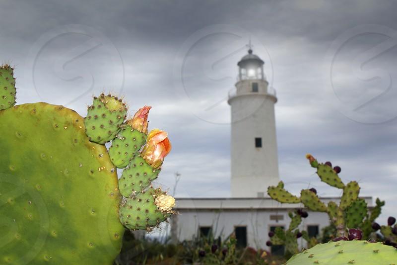 La Mola lighthouse Formentera nopal chumbera plants foreground photo