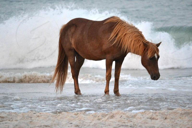 brown horse on seashore photography photo