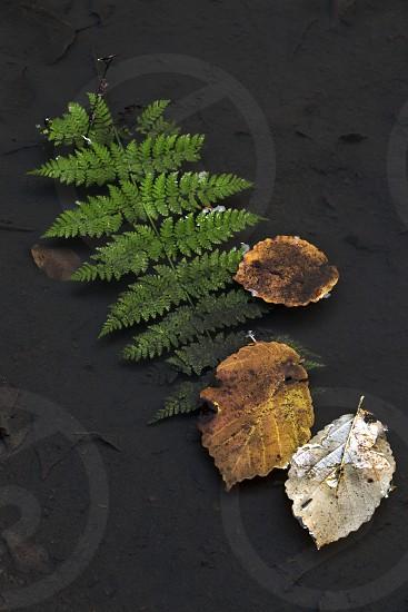 Woods Fern Water Northwest Leaves  photo
