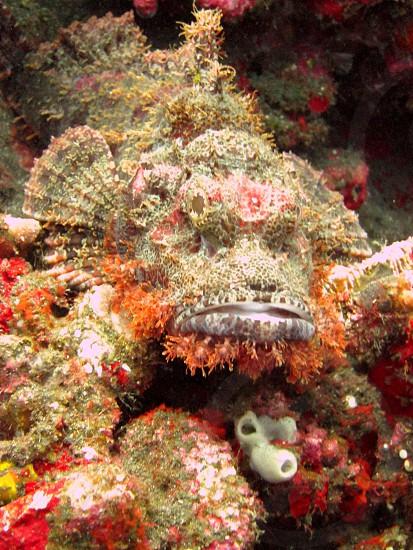 Stone fish in Bali photo