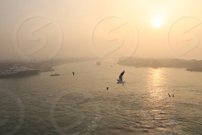 Fog morning sun seagull Venice italy bird river sunrise  photo