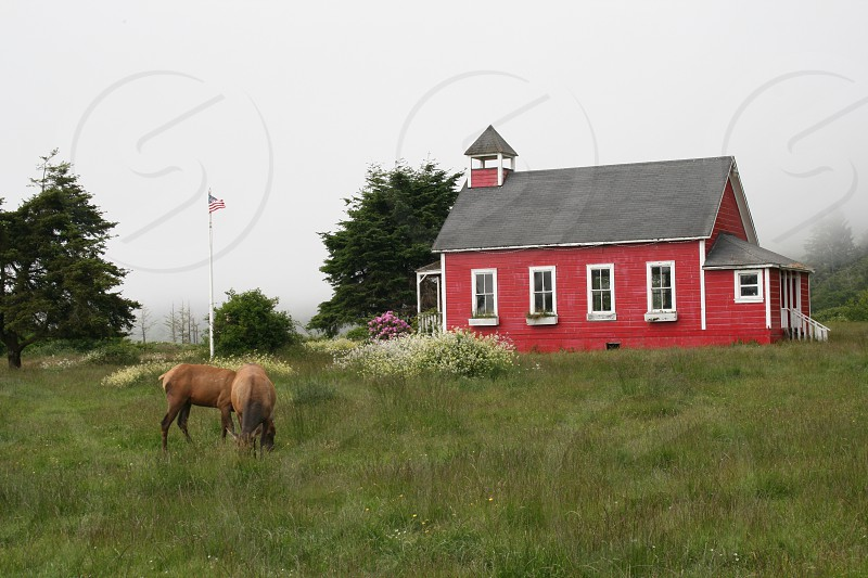 Pacific Northwest red school house elk photo