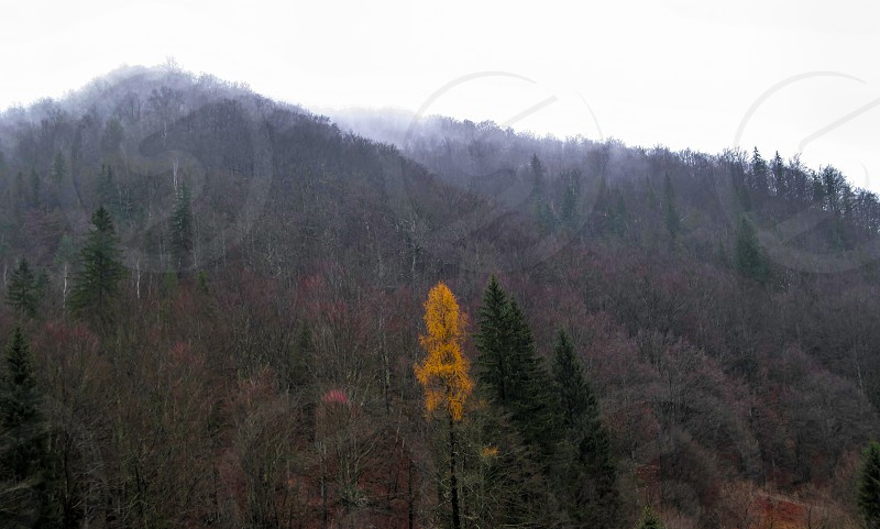 Late autumn - Cindrel mountains Steaza river Curmatura area 800m 22-11-2014 photo