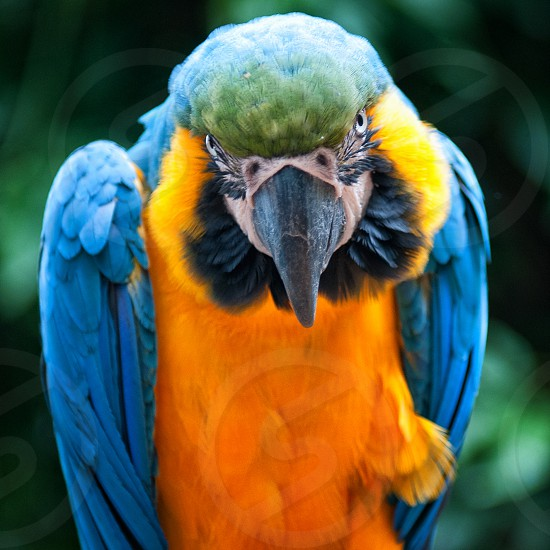 gold and blue macaw focus lens photo effect photo