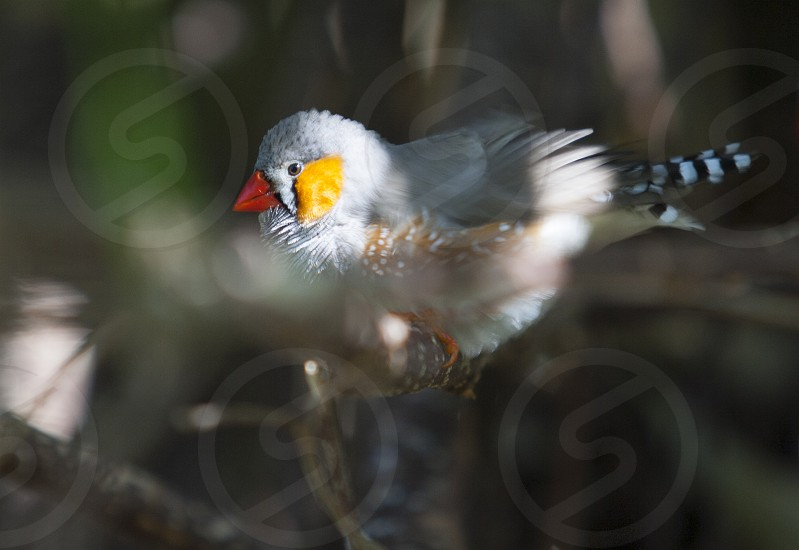 Wild finch perched on a limb photo