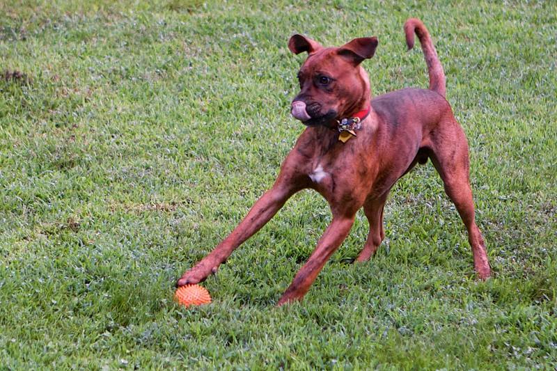Dog action. photo