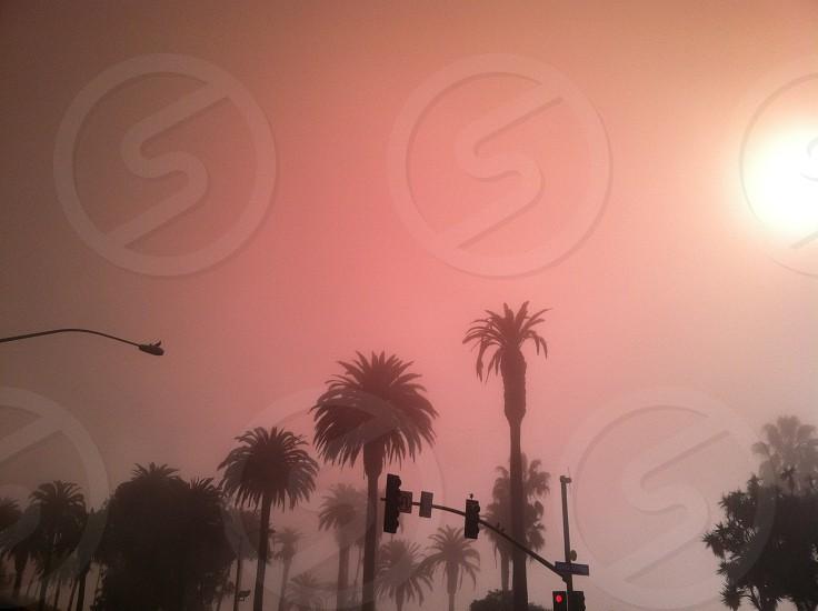 fog and palms photo