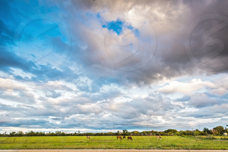 horses sunset dusk sky cloud Texas green grass grazing country road rural farmland photo