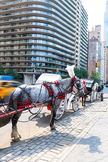 Central Park horse carriage rides in Manhattan New York US photo