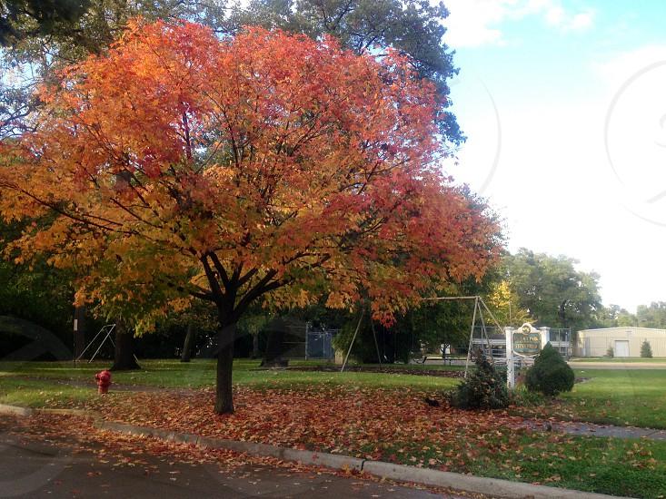 Pretty fall leaves in SE Michigan. photo