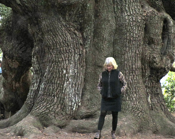 This is the Trunk of the Angel Oak Tree.... photo