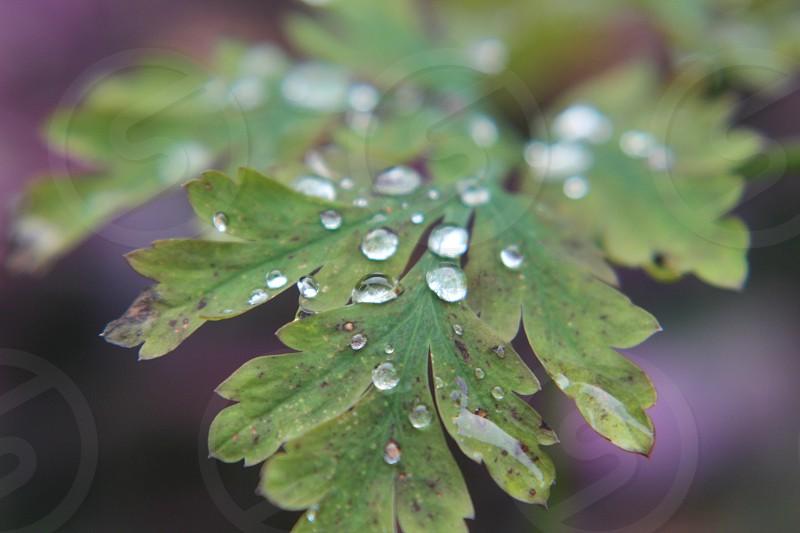Portland Oregon Spring rains photo