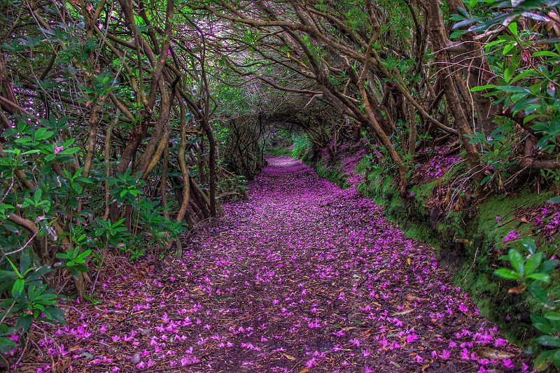 purple flower on sand road photo