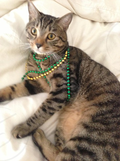 #felinefashion #accessories #cat #beads #necklace  photo