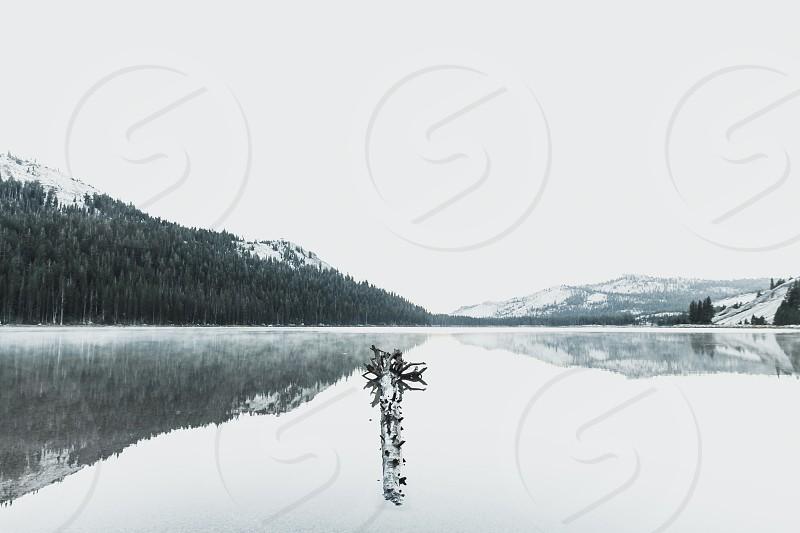floating log on glassy lake under gloomy sky photo