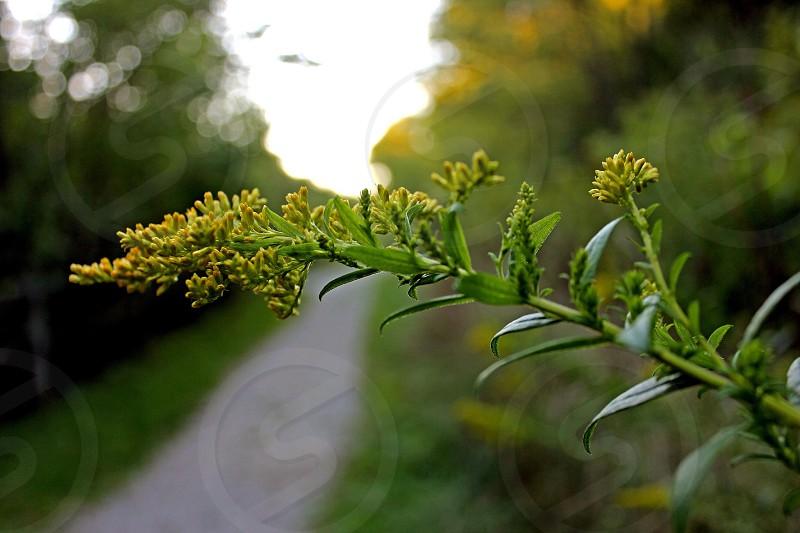 macro photography of green plants photo