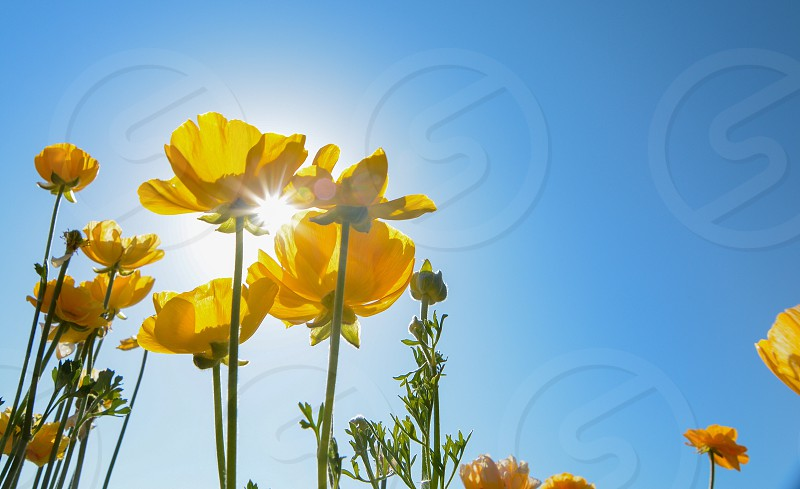 yellow flowers under blue sky during daytime photo