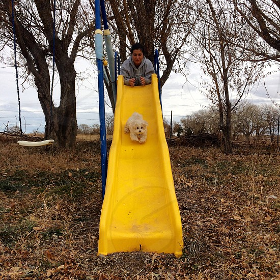 woman wearing gray jacket leaning on top of the slides watching the dog sliding with bare tree as background photo