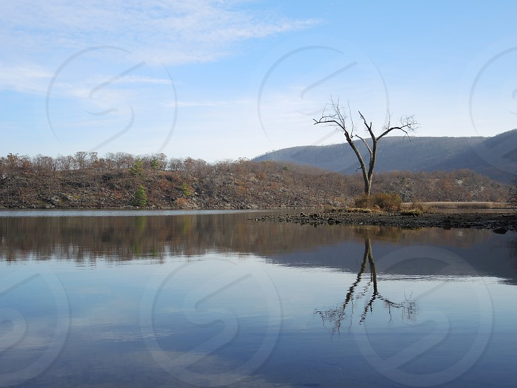 leafless tree in the of a body of water across are a brown mountain under blue skies during daytime photo