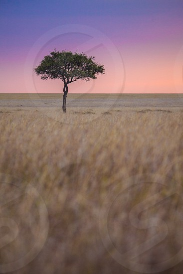 green solitary tree on brown grassy field photo