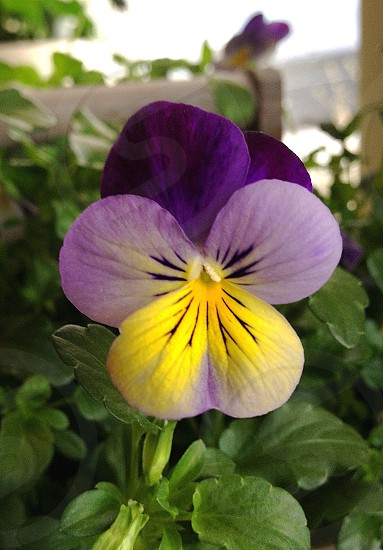 shallow focus lens photo of purple and yellow flower photo