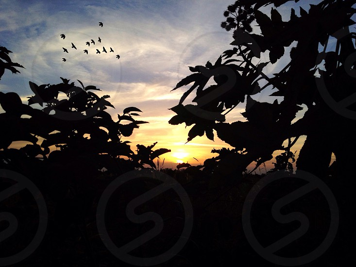 silhouette photo of tree leaves during golden hour photo