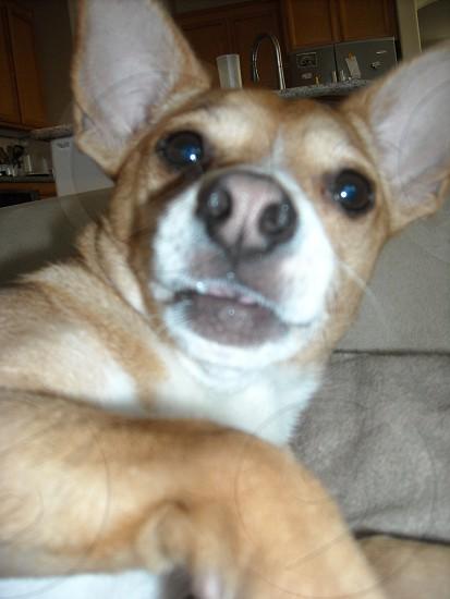 Dog selfie! photo