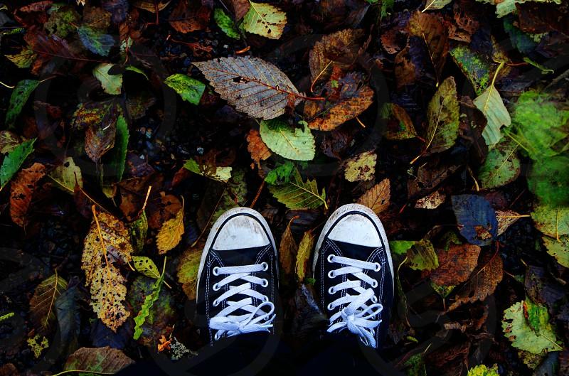 Dead leaves breaking under your feet. photo