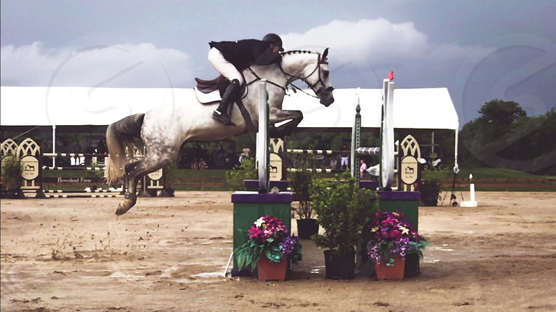 Horse horse show show jumping grey horse sports competition equestrian event horse life horse photography equestrian photography equestrian life Grand Prix  photo