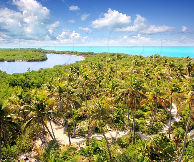 aerial view Contoy tropical caribbean island Mexico palm trees and sea photo