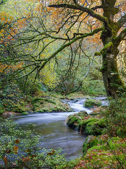 rocky stream with green moss covered boulders through green and orange leaf trees in forest time lapse image photo