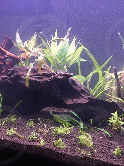 nature tank! photo