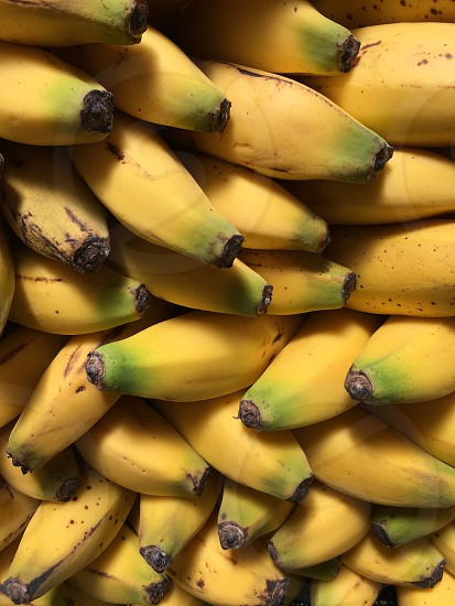 Bunches of bananas photo
